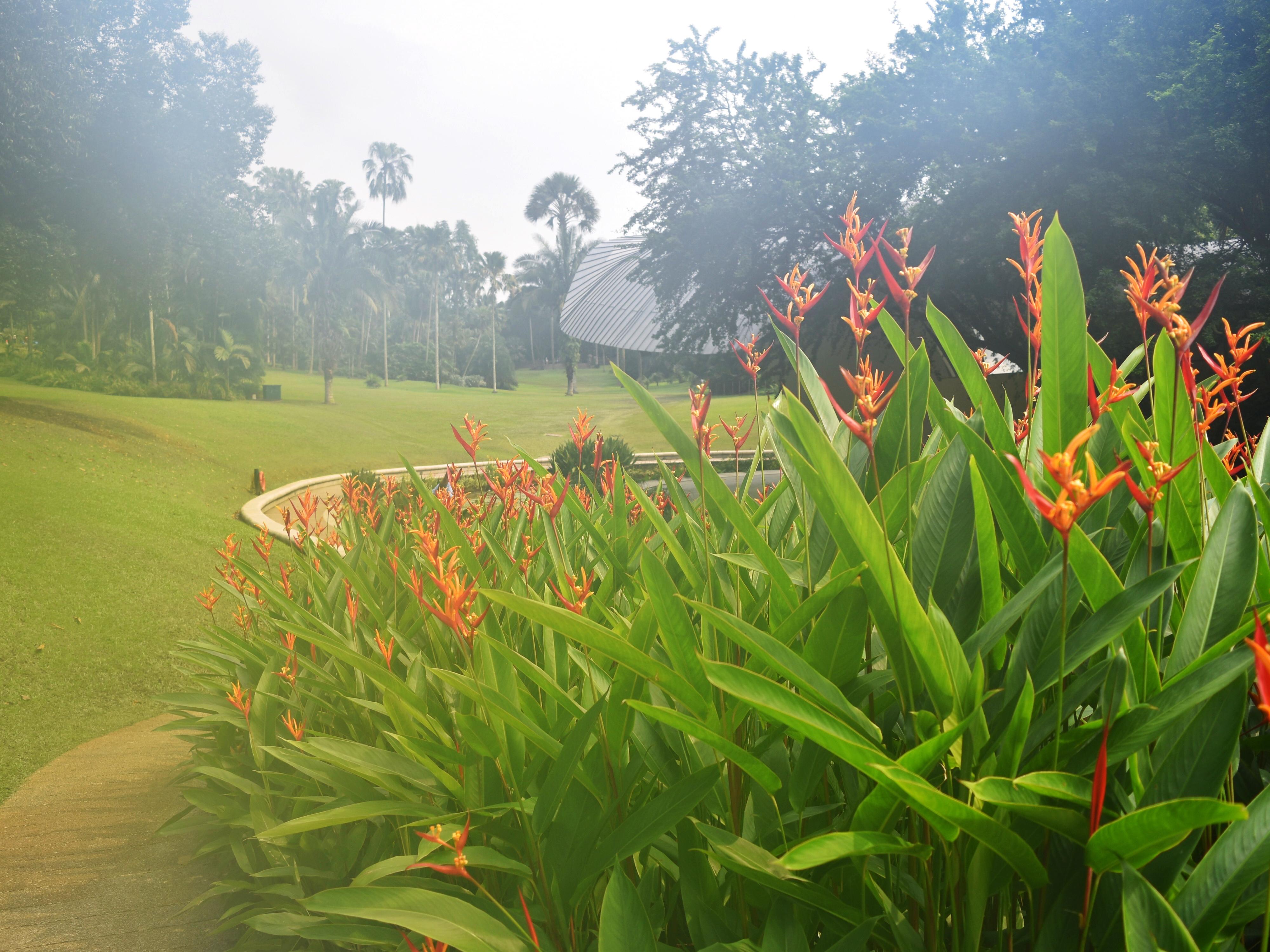 flowers in haze